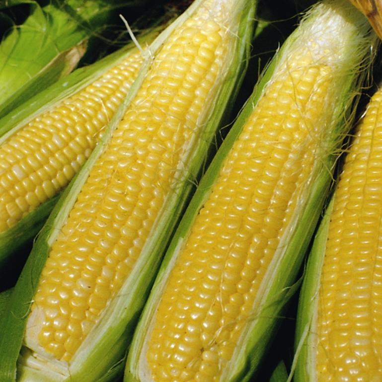 Easy vegetable gardening - Home Plants Vegetable Plants Interesting Amp Unusual Sweetcorn
