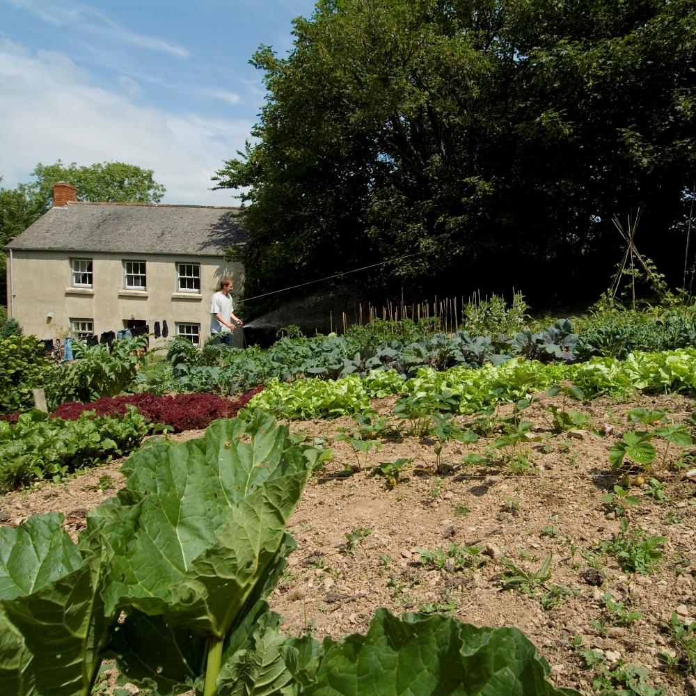Large vegetable garden gift voucher rocket gardens for Large vegetable garden