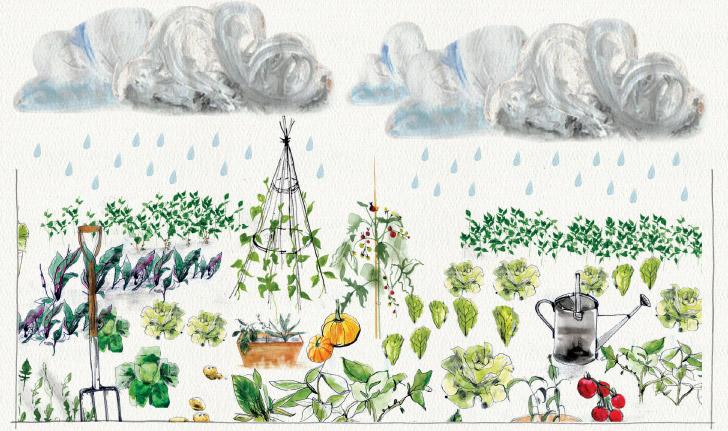 Cornish Rain