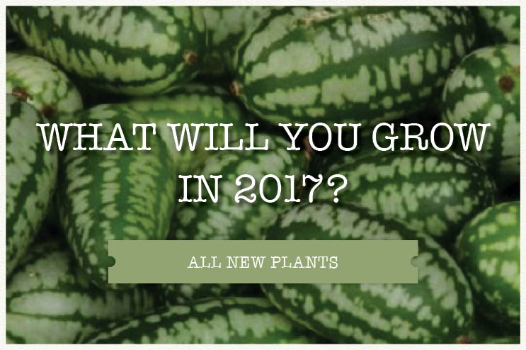 What will you grow in 2017