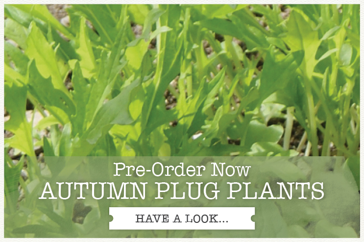 AUTUMN VEG PLUG PLANTS