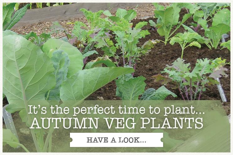 Rocket Gardens | Fruit, Herb, Veg & Salad Gardens
