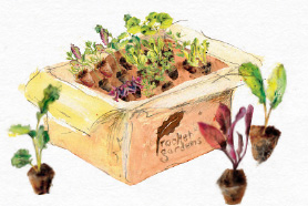 Box of veg plants