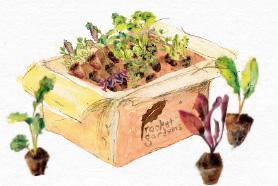 Box of veg plants