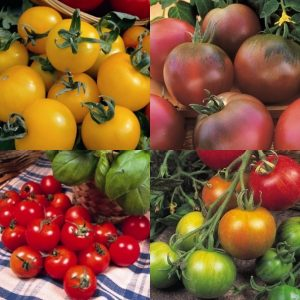 Colourful Tomato Collection