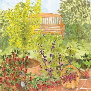 Compact Fruit Garden
