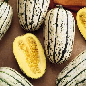 Cornells Bush Delicata Winter Squash