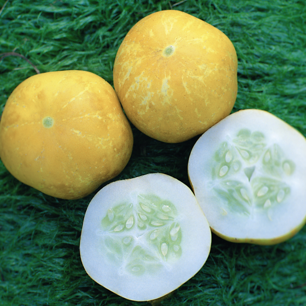 Crystal Lemon Cucumber
