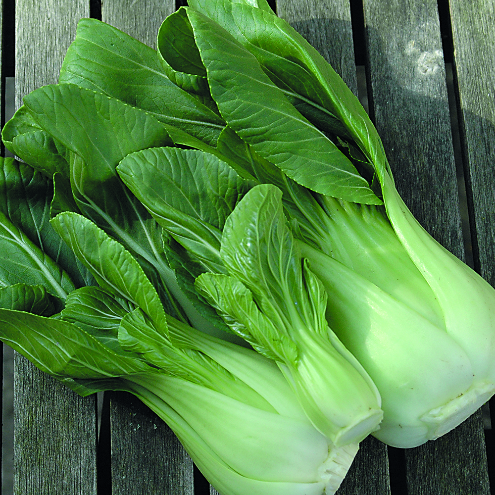 how to grow pak choi