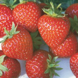 Honeoye Strawberry