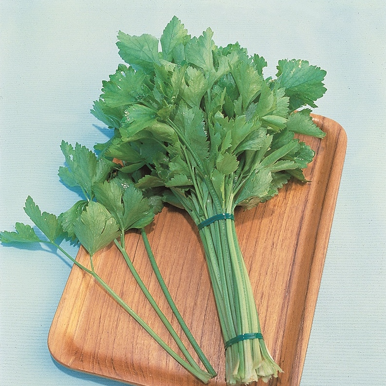 how to grow chinese celery