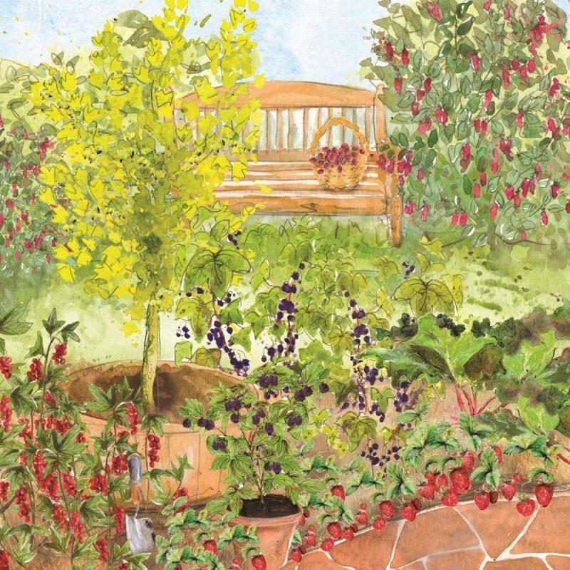 Large Fruit Garden