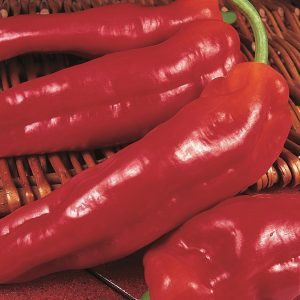 Long Red Marconi Pepper