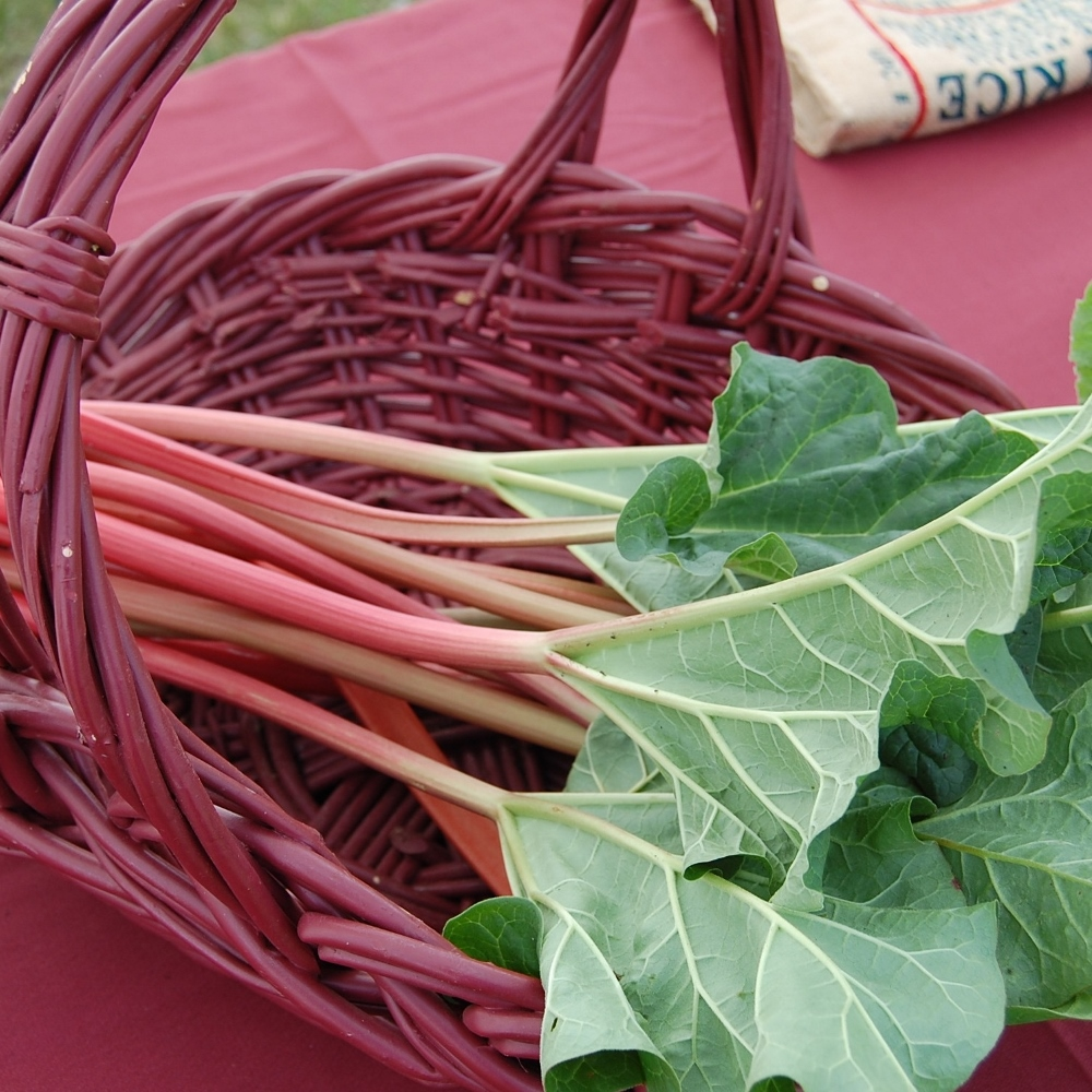 One Organic Rhubarb Crown