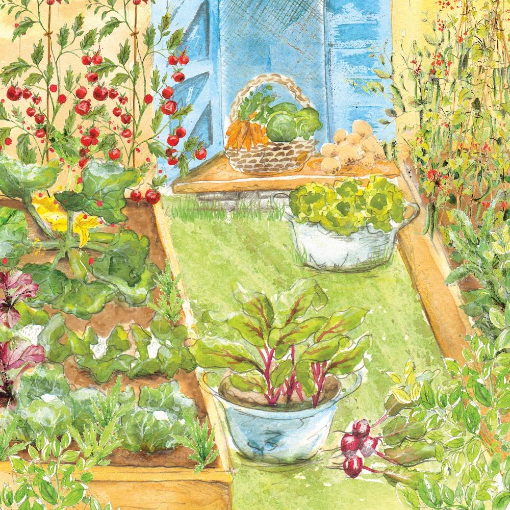 Small vegetable garden rocket gardens for Vegetable patch in small garden