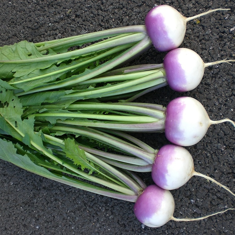 Sweetbell Turnip
