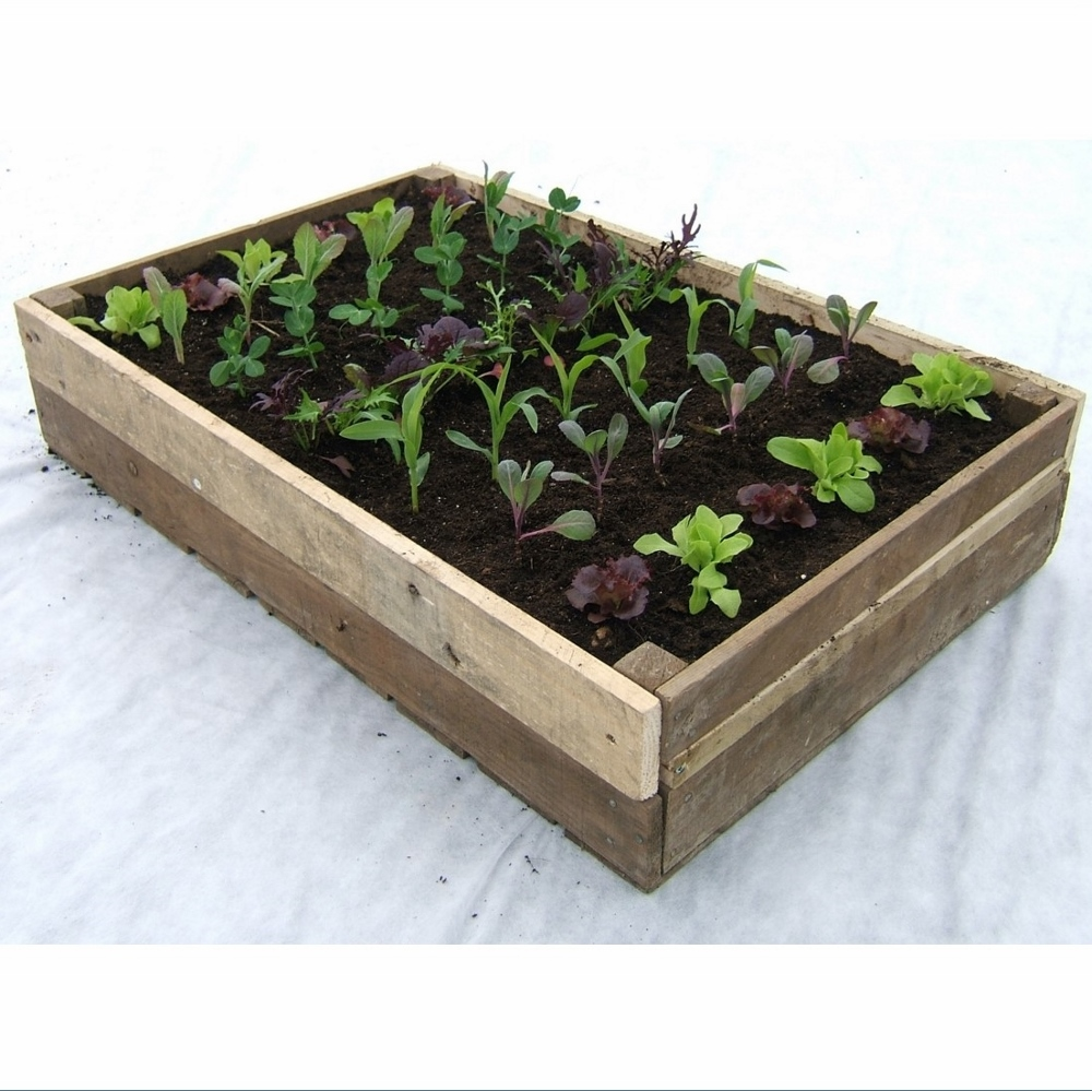 traditional wooden crate planter rocket gardens