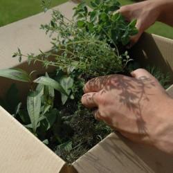 compact herb garden arriving