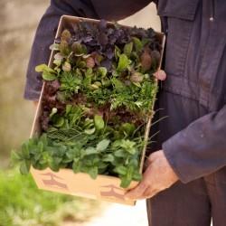 Garden in box1
