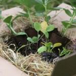 plant selection