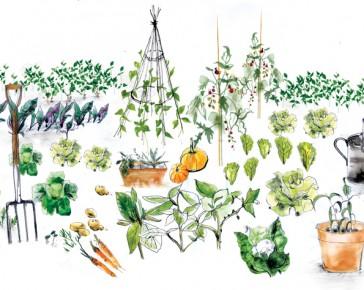 Constant Garden