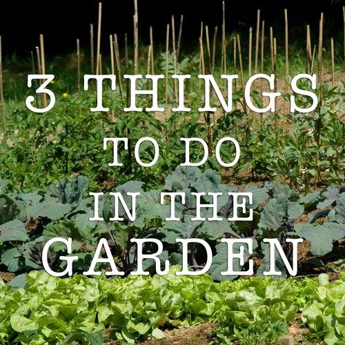 3 things to do in the garden