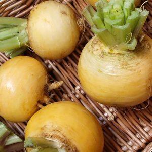 golden ball turnip
