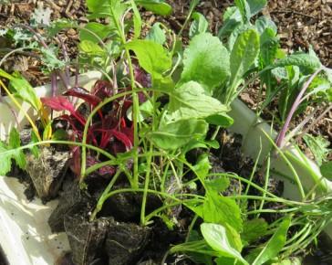 october kitchen garden