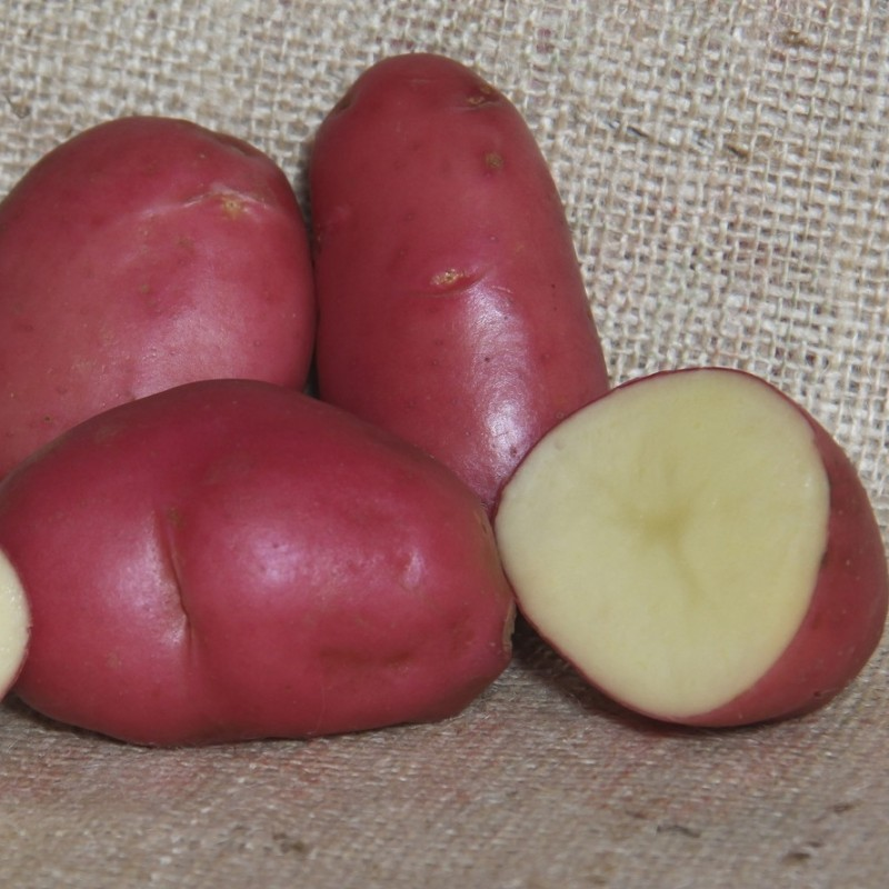 desiree-potatoes