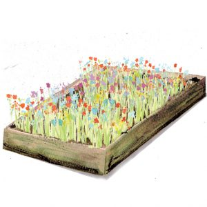 wildflower meadow planter