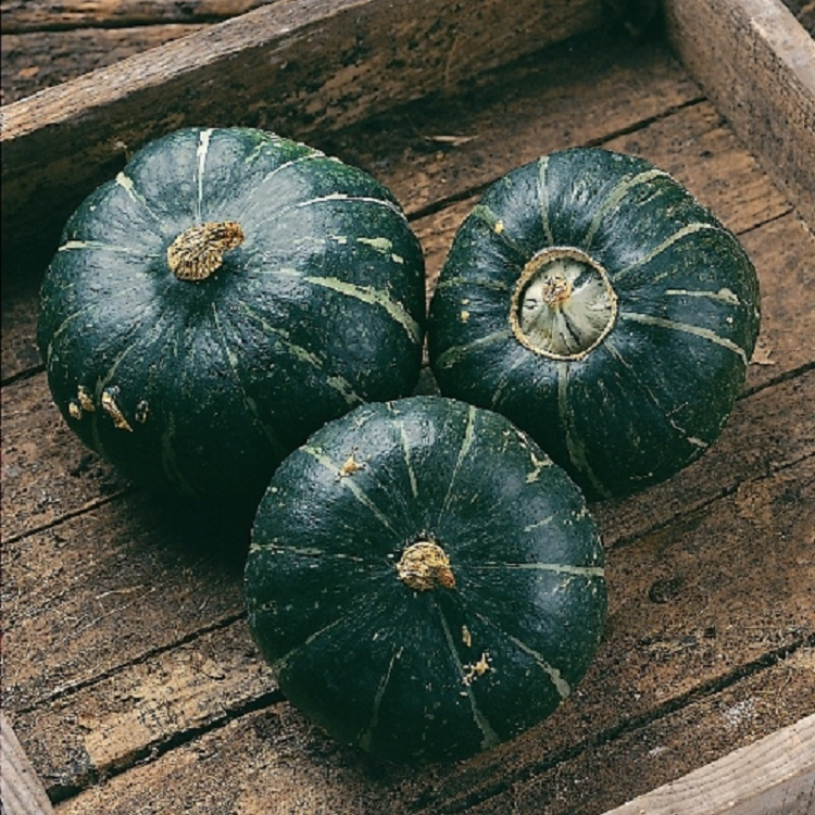 buttercup-winter-squash