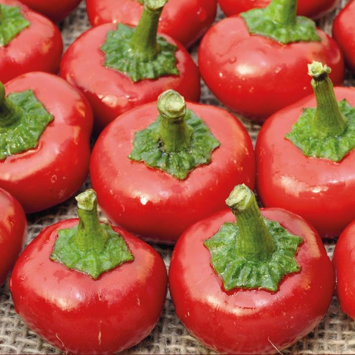 cherry-bomb-chilli-pepper