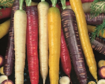 Colourful Carrot Selection