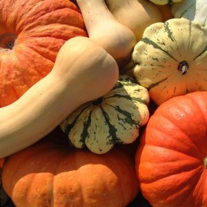 pumpkin-and-squash-patch