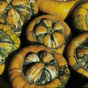 turks-turban-winter-squash