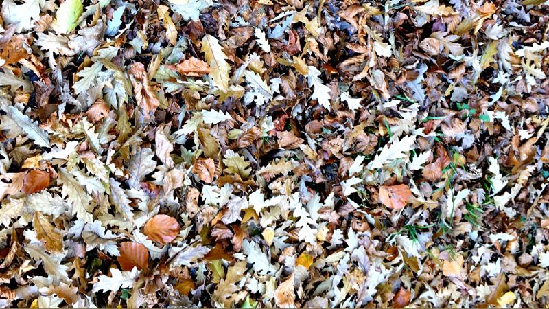 leaf mould