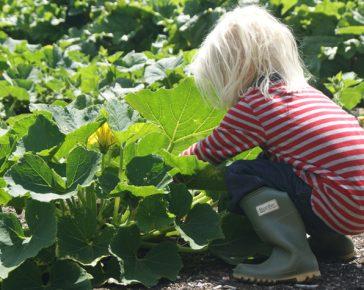 growing veg with children