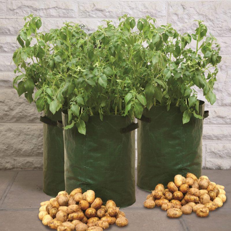 Potato Patio Planters 1