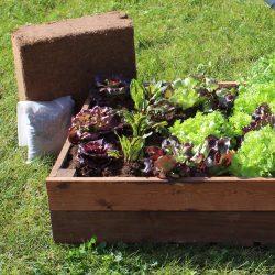 Salad-Planter---1