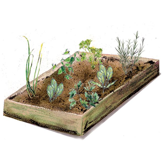 planter-herb