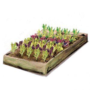 planter-salad2