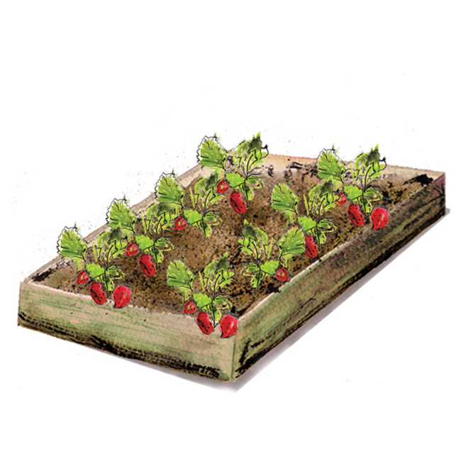 Small Year Round Veg Patch: Strawberry Patch Planter