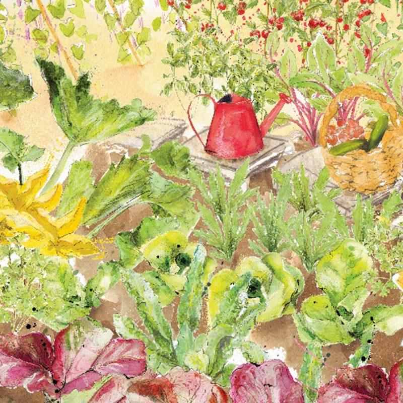 Family Favourites Veg Patch (Autumn)