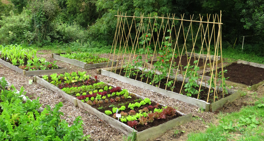 Vegetable Garden Landscaping Design