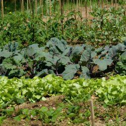 Small-Vegetable-Garden-landscape