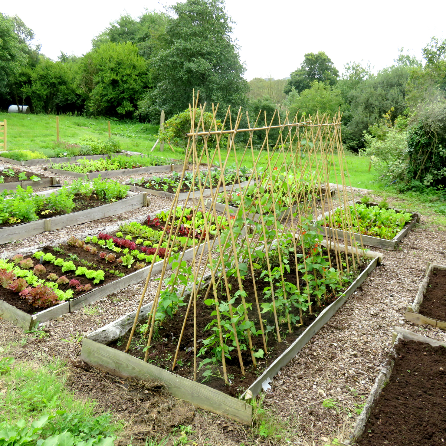 Small Year Round Veg Patch: Large Vegetable Patch Experience (Gift Voucher)