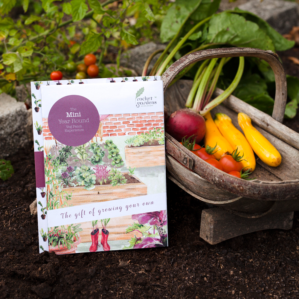 Small Year Round Veg Patch: Mini Year Round Veg Patch Experience (Gift Voucher