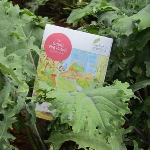 small-veg-patch-voucher-2