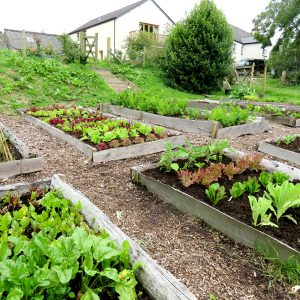 Veg-Patch-Large-3