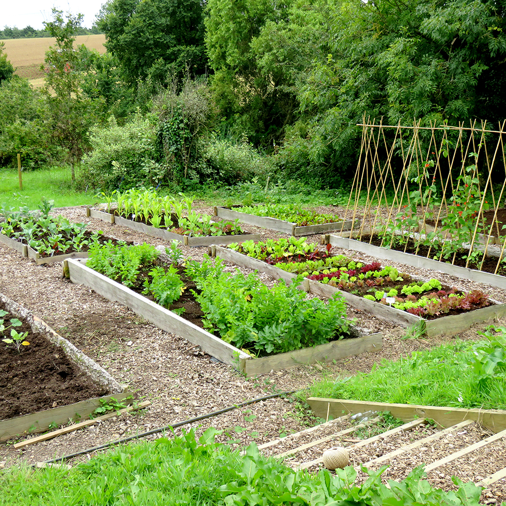 Large year round veg patch rocket gardens for Garden vegetable patch